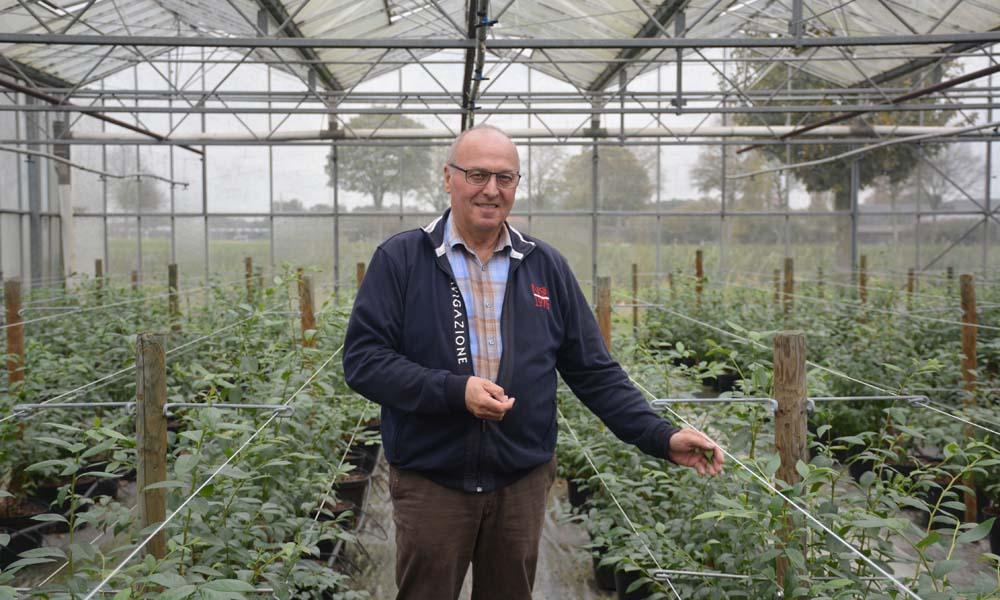 Theo Douven uit Melderslo teelt sinds eind 2013 blauwe bessen onder glas in Straelen, Venlo. Alle bessen worden verkocht in een winkel bij het bedrijf.