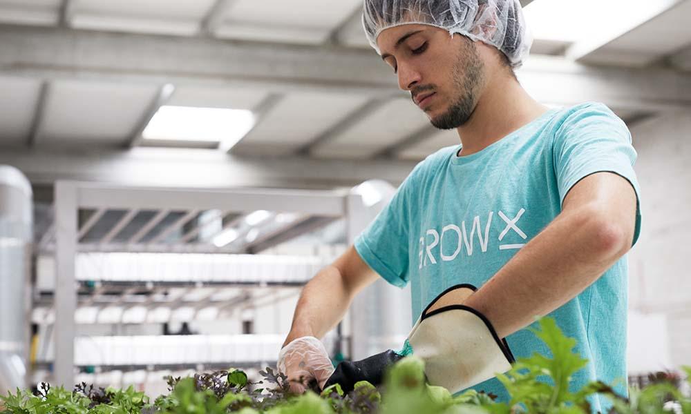 Medewerker van GrowX aan de slag in de verticale boerderij