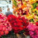 International Floriculture Trade Fair 2017 in Vijfhuizen