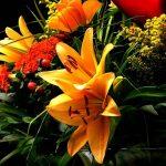 Sierteeltbloemen