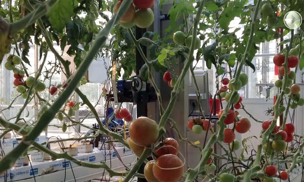 Dit jaar is het Programma Precisietuinbouw gestart. Een vorm van tuinbouw waarbij planten heel nauwkeurig die behandeling krijgen die ze nodig hebben.