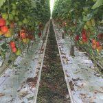 In het programma Graduate School Tuinbouw & Uitgangsmaterialen gaan vier nieuwe aio's aan de slag.
