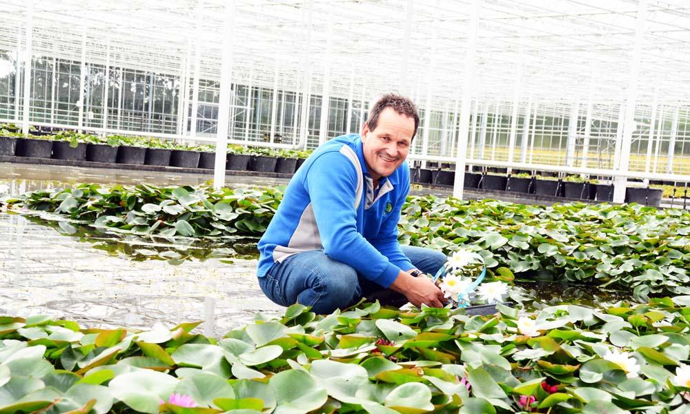 De waterplantenkwekerij heeft één seizoen ervaring met telen in een nieuwe kas. Onder het diffuse glas zijn de planten intenser, roder, bonter en compacter