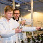 Het vierde jaar van het onderzoek naar belichting van phalaenopsis in de winter bevestigde de eerder gevonden resultaten.