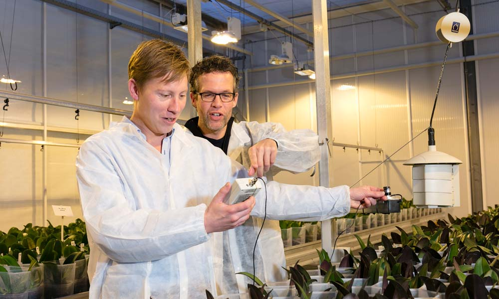 Grenzen van dimmen van verlichting in phalaenopsis zijn bereikt