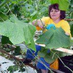 Elke plant heeft reservevoedsel nodig om de nacht door te komen. Gedurende de dag wordt daarom altijd zetmeel opgeslagen.