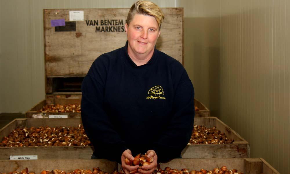 Mopabloem verhuisde naar Rijsenhout. In acht maanden tijd lieten Ed en Sandra Griekspoor het potplantenbedrijf ombouwen tot een moderne tulpenbroeierij