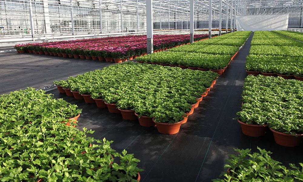 Webapplicatie optimalisatie watergift potplanten bijna gereed