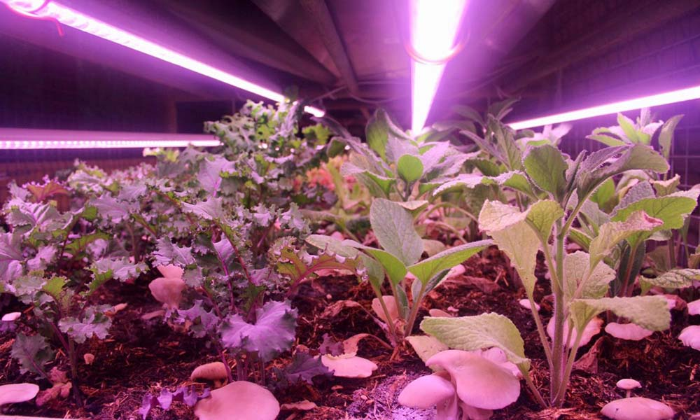 De ondergrondse teelt van gewassen bij Cycloponics.