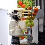 Panasonic demonstreert een robot die tomaten kan plukken