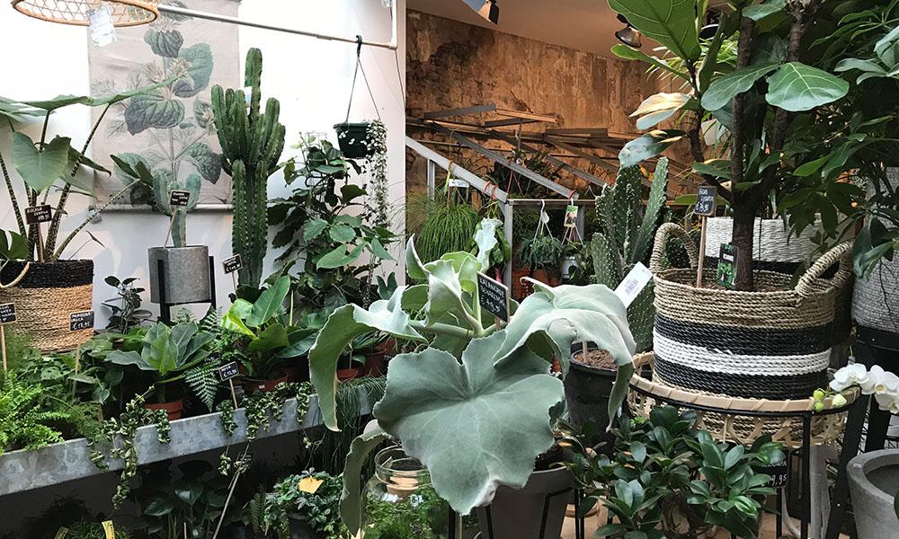 Groene Planten