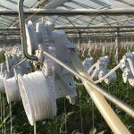 Het Plant Elevation System is een innovatief systeem dat het laten zakken van tomaten- en komkommerplanten in de hogedraadteelt automatiseert.
