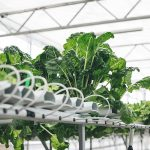 AmHydro hydroponics