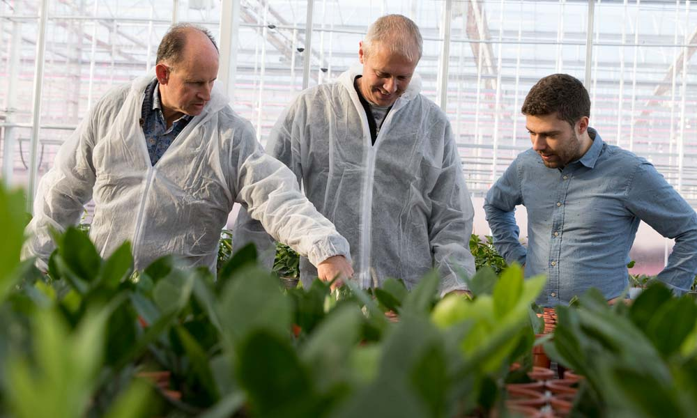 Na vruchtgroenten en snijbloemen is het de beurt aan potplanten om kennis te maken met Het Nieuwe Telen. Zamioculcas is gekozen als proefgewas.
