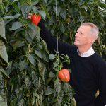 et een split-rootsysteem is natrium uit het systeem te oogsten en met het gewas af te voeren.