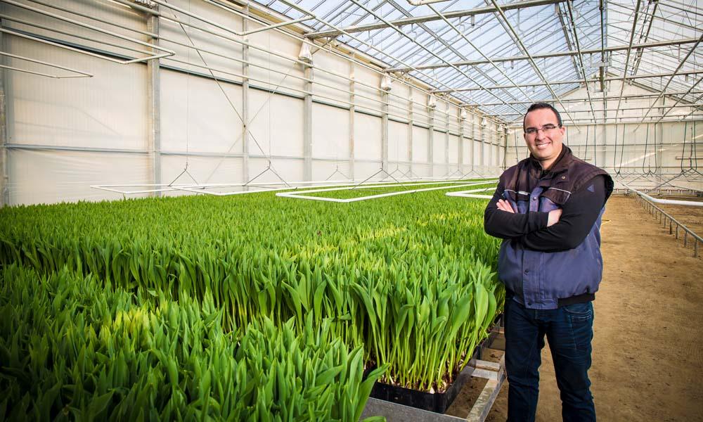 Bollenteler kiest ontsmettingstechniek vanuit de glastuinbouw, Fusarium oxysporum in spoelwater tulp te lijf met UV-C