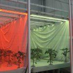 Over kansen en toepassingen wordt nagedacht in het project Denkkader Licht.