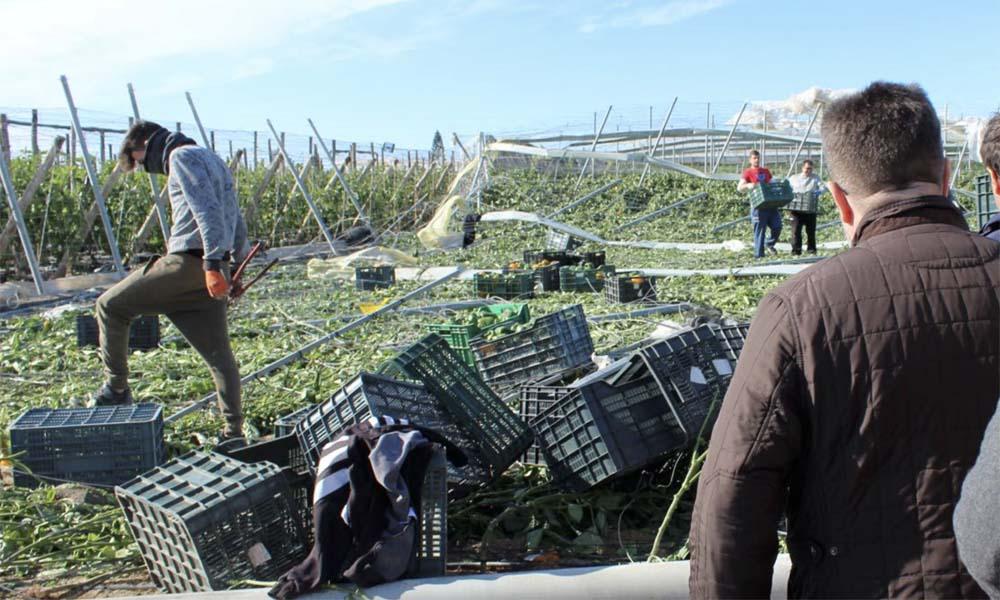 Een teeltgebied dat is getroffen door de Spaanse tornado's