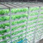 Vertical farming plant factory