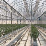 tuinbouw in Mexico