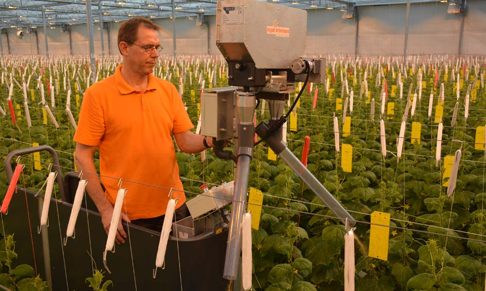 Wijnen Square Crops testte afgelopen jaar een automatische verdeler van roof- en voermijten in hogedraadkomkommers.