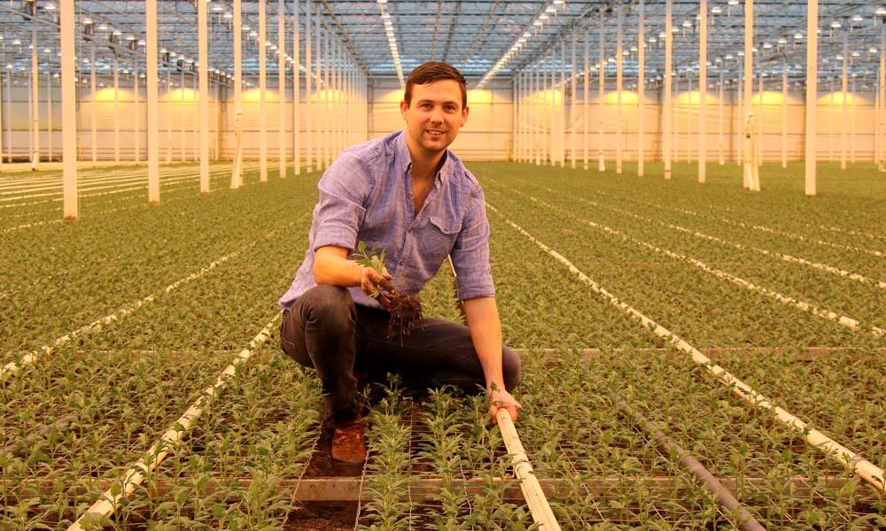 Beyond Chrysant is een van de vier bedrijven waar een proef loopt met een blend van plantversterkers.