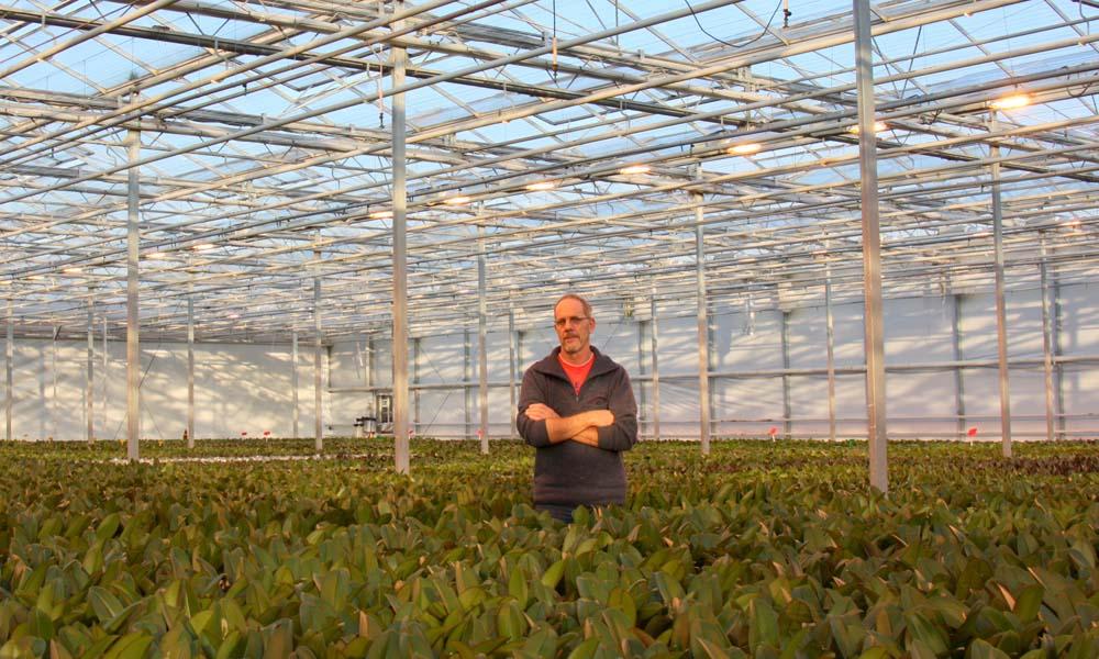Probleem in de phalaenopsisteelt bij Aardse Orchids is onder andere een aantasting met Fusarium. De ondernemers kozen voor de UV-ionisatietechniek.