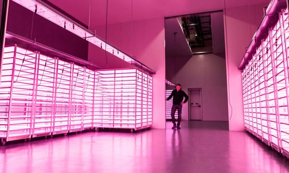 Het plantenlaboratorium van Vitro Plus