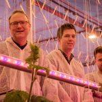 LED-proef komkommer in combinatie met schermen. 'Markt vraagt jaarrondproductie, dus daar gaan we voor'