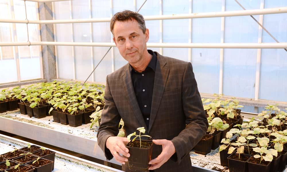 Natuurlijke afweerstoffen uit siergewassen zijn te extraheren en in te zetten als gewasbeschermingsmiddel. Dat blijkt uit onderzoek in Bleiswijk.