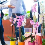 Orchid Inspiration Days 2018