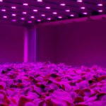 Staay Food Group bouwt nieuwe vertical farm naast Fresh Care centrum