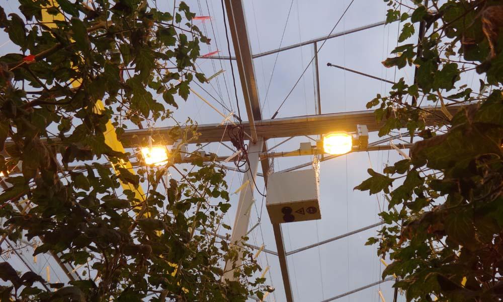 Efficiënter en nauwkeuriger sturen door meten fotosynthesesnelheid
