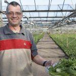 Groenteteler Erik Hoogenboom uit Ridderkerk: 'Twaalf soorten uitheemse groenten, waarvan zeven jaarrond'