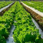 Nieuwe beurs voor vollegrondtuinbouw vervangt Tuinbouw Relatiedagen Venray