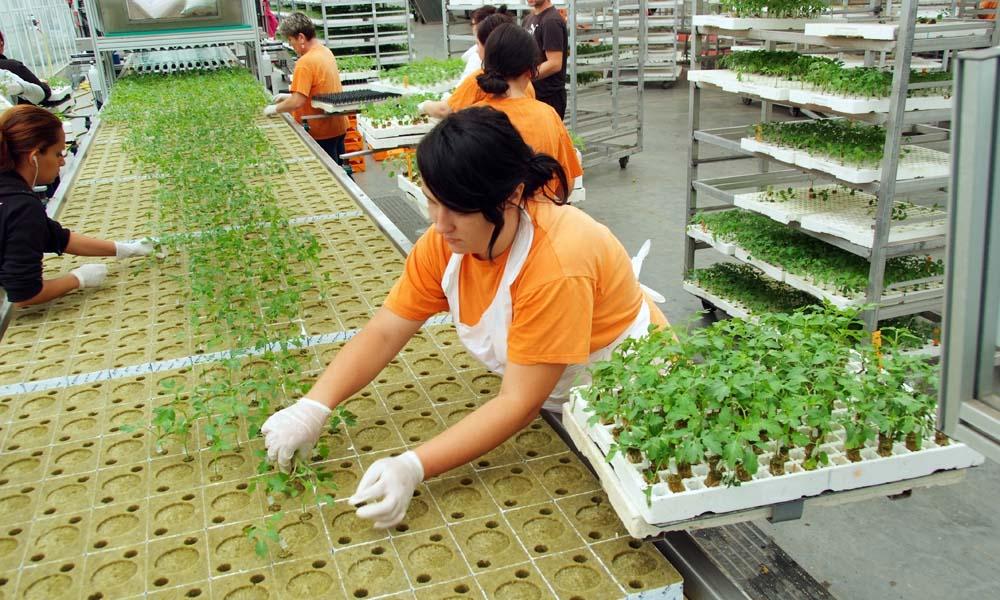 Aandacht voor juiste keuze van onderstam en plantdichtheid