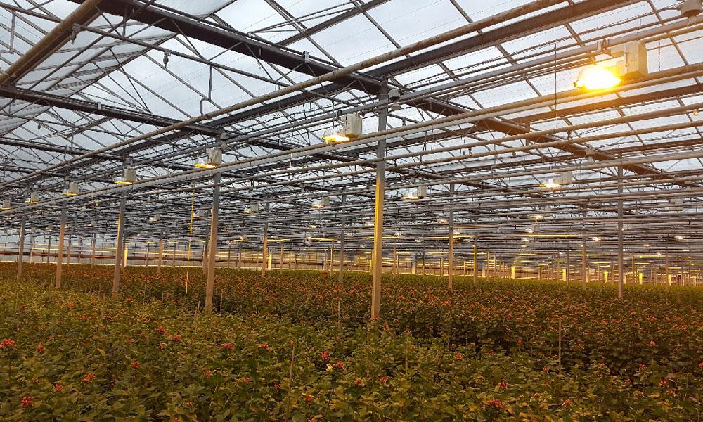 gelijkstroom in glastuinbouw