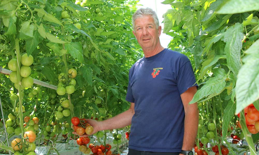 Tomatenteler verfijnt meststofgift steeds verder en houdt systeem schoon
