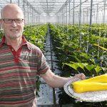 'Geel is zoeter dan groen en geliefd in salades'