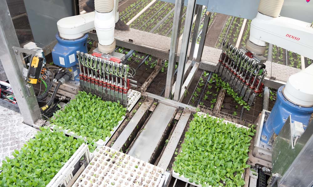 De ISO Robot Plug Planting machine maakt kans op de Greentech Innovation Award 2018 en de Greentech Impact Award 2018. De robot maakt het mogelijk om pluggen van jonge Lisianthus-planten met robotarmen direct vanuit de tray in volle grond te planten.