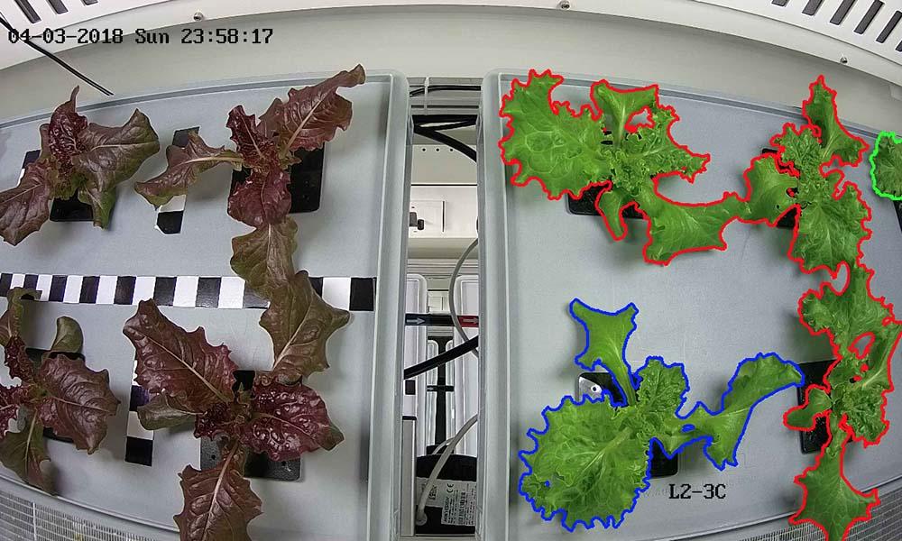 Als organisatie is Wageningen U&R betrokken bij een project waarbij één jaar lang een 'ruimtemissie' op Antarctica wordt gesimuleerd. In de 'Future Exploration Greenhouse' worden verse groenten geteeld om het dieet van de volledig geïsoleerde bemanning te verrijken.