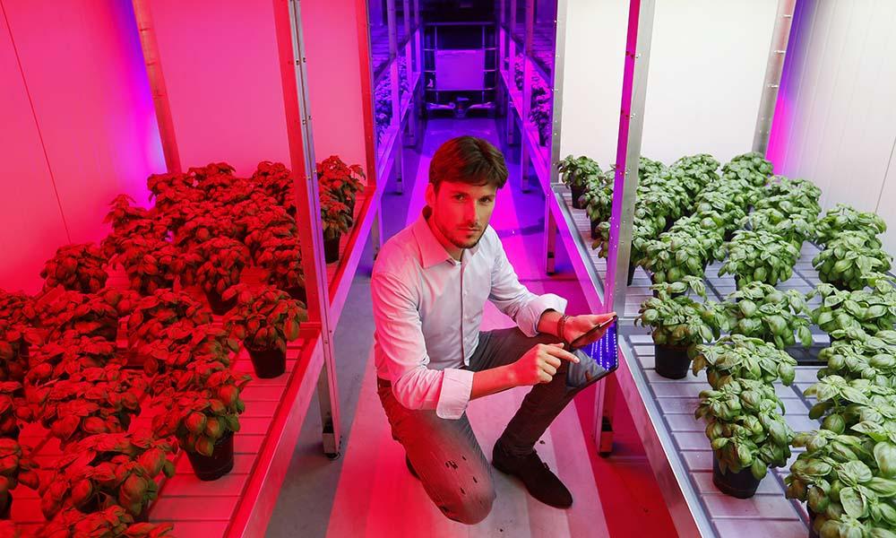 Bedrijfsspecifiek LED-lichtrecept dankzij eigen teeltonderzoek