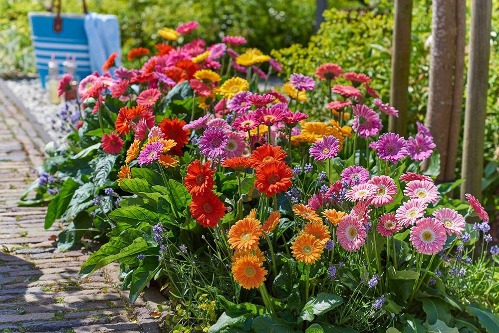 Florist Holland en HilverdaKooij gaan fuseren