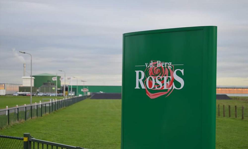 Van den Berg RoseS en Van der Drift Roses starten commerciële samenwerking