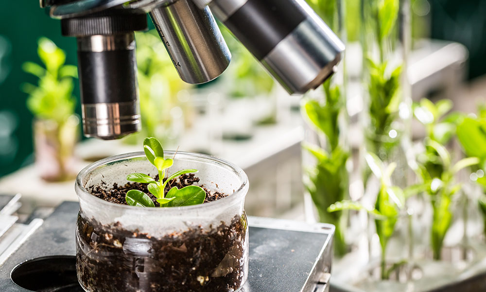 Architectuur van de plant straks te beïnvloeden door aansturing stamcellen?