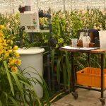 Op verzoek van de gewascoöperatie is onderzoek uitgevoerd naar de effecten van natriumophoping en recirculatie.