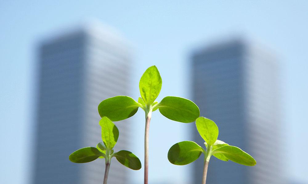 Dutch Greenhouse Delta officieel gelanceerd
