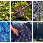 productie van natuurlijke indigo in China