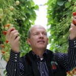 Marcel Dings tussen de aardbeien.