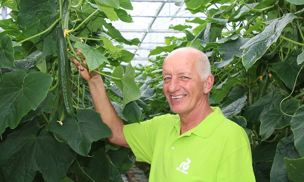 'Telen van komkommers op perliet vraagt om anders watergeven'
